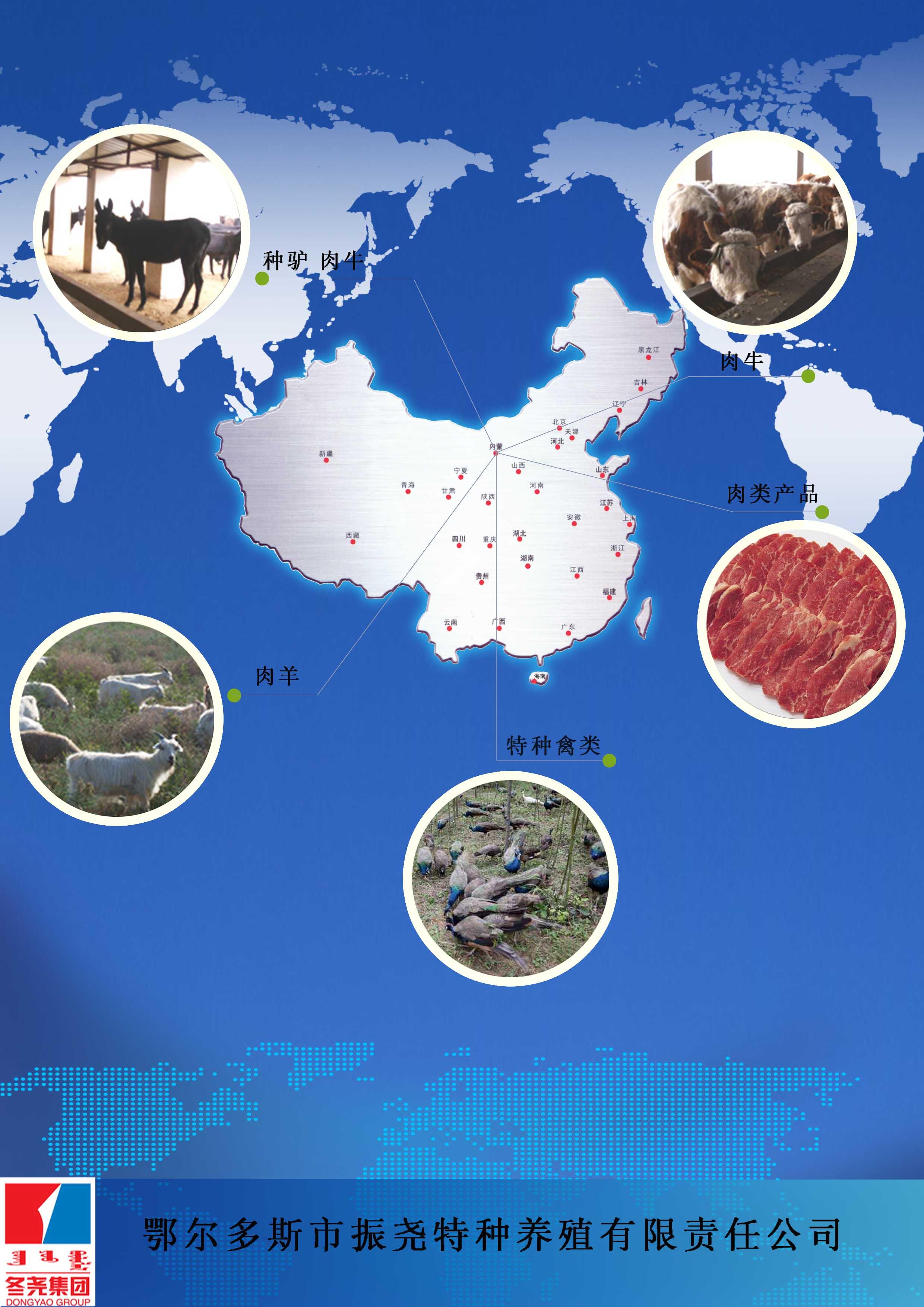 振尧公司简介 鄂尔多斯市振尧特种养殖有限责任公司位于鄂尔多斯市杭锦旗锡尼镇西3Km、109国道907公里处南侧,养殖区总占地面积1200亩,是内蒙古冬尧农牧业集团有限公司全资控股的子公司。振尧公司注册资金1000万元,经营范围:种驴、肉驴、肉牛、肉羊培育、特种禽类养殖以及畜禽产品深加工、销售。 振尧公司经过冬尧集团公司两年的投资建设,公司已经完成产业规划12000万元的投资建设。公司生产的产品均以通过HACCP、14000、18000、ISO9001及国家有机机构的评审认。企业同时被自治区、